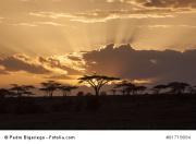 Bild fotolia Afrika